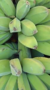 กล้วยหักมุก1